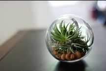 Adorable plants / Cute terrariums, flowers and more that nature has to offer. Nature is beauty. Every home need a terrarium!