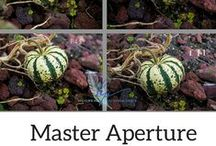 Photography | Aperture Tutorials and Tips / Aperture Tips, Aperture Tutorials, Photography Tips, Photography Tutorials, Pictures