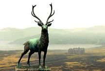 Scotland / A collection of pins we love about Scotland