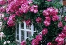Flora / by Alyssa Watson