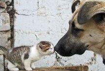 Cats + Dogs / BFFs!