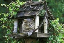 Awesome Kitty Palaces / Appointments worthy of her majesty.