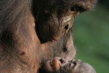 Mom&baby / Thank you for visiting this board! Please pin any pictures of Mom and Baby that are touching and sweet