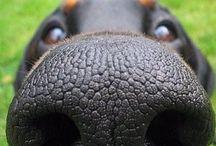 Dog Nose / Lovely dog noses!!!!