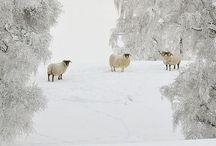 WINTERY  WONDERLAND ⛄️ / ⛄️  ≈ enjoying winter ≈  ⛄️ / by ::༺ Elizαbeth ༻::