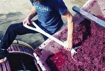 *Behind-the-Scenes* / See what we do to produce our #Colorado #wine!