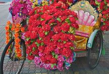 Color flowers on a bike
