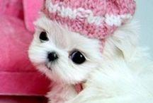 Puppy Love!!!