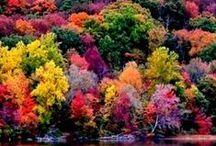 Autumn colors // colors de tardor  // colores de Otoño / Before-And-After Photos Of Autumn Abans i Després de Fotos de Tardor Antes y Después de Fotos de Otoño