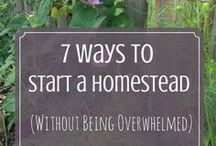 Urban Homesteading / Urban homesteading ideas, projects, inspiration, and advice - especially for beginners like me!