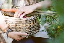Garden  / Organic and creative gardening tips, and pretty garden scapes
