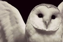 Owls / Owls, my favourite animals