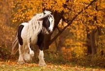Horses / My favourite animals - horses:)