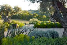 Louw's Garden & Tree Love