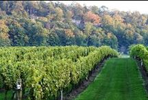 Niagara Wine region / The surrounding wine region  around the Orchard Croft Bed and Breakfast in beautiful Niagara region , Ontario , Canada. Wonderful stay, warm hospitality , great cuisine and the famous award winning Bench wineries awaiting you! www.orchardcroft.ca If you want to add to it ask an invite on my pin! Welcome