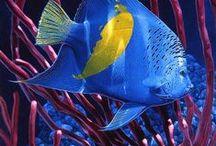 ~Underwater Beauty / by Elizabeth Ann