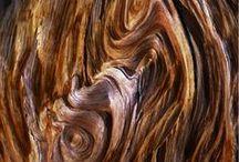 Wooden / by Marta Valdovinos