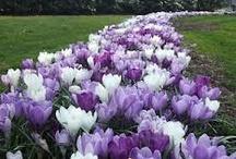 I love Purple / Everything purple