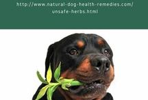Herbs and Aromatherapy / Using safe herbs and essential oils to help treat minor dog health problems and enhance dogs' wellbeing.