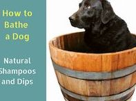 Dog Skin Problems / Various common skin problems in dogs and how to use natural remedies to help tackle such problems.