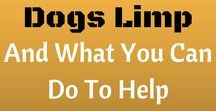 Dog Illness Symptoms / Common illness symptoms that indicate a dog may have some underlying health issues.