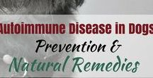 Common Dog Health Issues / Common health problems that dogs have over their course of life.