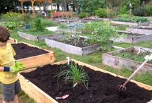 Vegetable garden DIY  / Want child and pet friendly vegetable garden. Start researching how what when