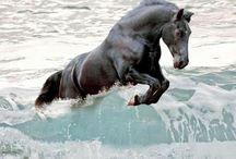 Лошади / Лошади