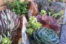 Jardín, plantas y hierbas