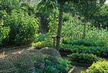 Gardening / by Pirate Mum
