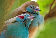 Aunt Birdie's Birds / by Merisa Eavenson