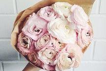 Flowers / by Ganihina Daria
