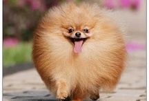 Poof Balls & Baby Animals / All sorts of cute creatures to brighten your day.