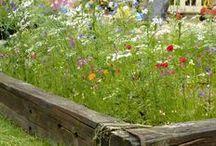 Vogelvriendelijk tuinieren / Hoe maak je van jouw tuin een tuinvogelparadijs? De leukste doe-het-zelf tips en praktische oplossingen.