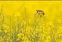 Red de Rijke Weide / Vogelbescherming wil de bloemrijke weilanden terug. Alleen op die manier kunnen we de weidevogels redden. Teken de petitie op www.redderijkeweide.nl en help Vogelbescherming een uniek weidelandschap te herstellen vol bloemen, bijen en vogels. Hoe meer steun, hoe meer wij kunnen doen. Zuivelfabrikanten en politici moeten overstag. Red de rijke weide!