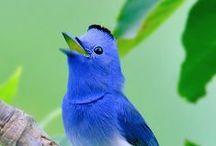 Wij houden van... blauw!
