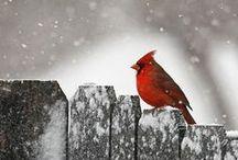 Wij houden van.... rood!