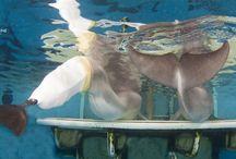 Clearwater Marine Aquarium...Everything / by Lorelei Bungard
