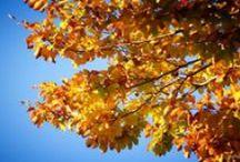 Autumn / Autumn is coming :)