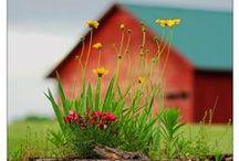 Non-standard Barns / Unusual arrangement of a barn