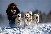 Sled races