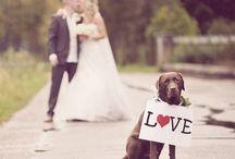 Dog lovers / Dog lovers