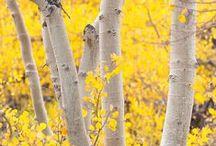 Seasons:Autumn / by Larissa Waiz