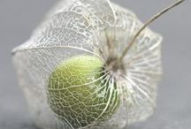 Flowers (Macro) / by Larissa Waiz
