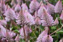 Flora Files