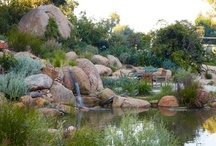 Billabongs & Natural Pools / A billabong is a naturally occurring water feature that fluctuates with the seasons. Our billabongs & natural pools, are designed to do the same. They sustain the surrounding environment, providing water for irrigation, wildlife & fire safety. Chemical-free, they use natural filtration systems to provide clear swimming water. Converting traditional swimming pools into natural ones has enormous environmental benefits & is one of our core strengths. More at http://ow.ly/hS1Fk