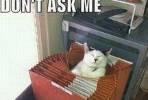 Cat memes / cat memes lol  / by Joy Ladignon