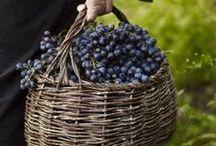 Winegrapes / Viininviljelyä ja viinirypäleiden jatkojalostusta sekä ihania kuvia viinitiloilta!