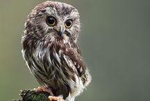 NICE OWLS :3