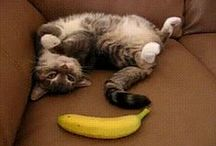Funny Animal Pictures and Gifs